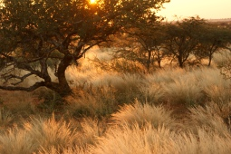 Grassland at sunset in South Africa