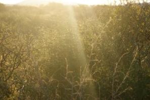 Grassland in South Africa